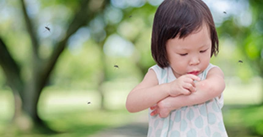 Summer and insect bites: how to protect your children.
