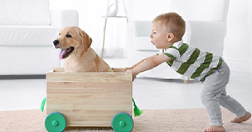 Children, dogs and puppies: some advice to help ensure that everyone is kept happy